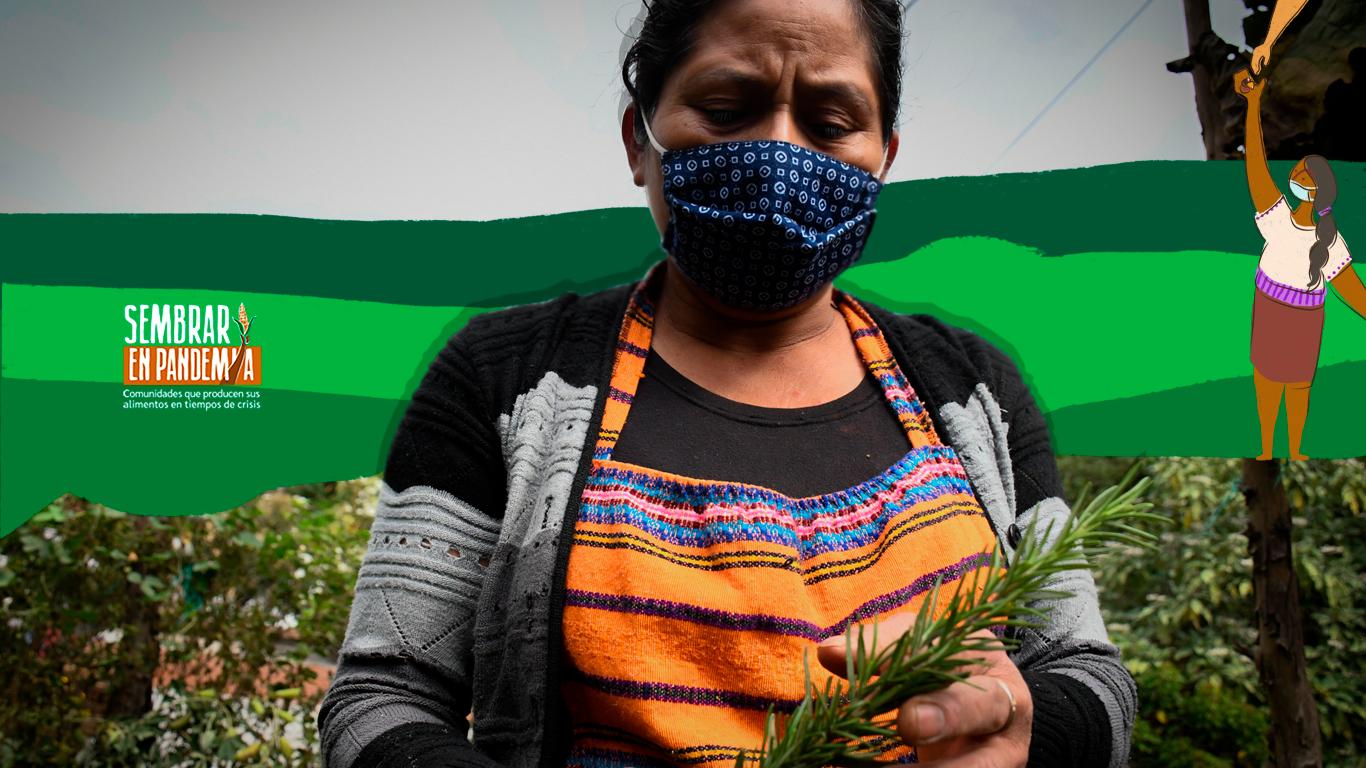 Volver al sistema milpa en épocas de la agroindustria