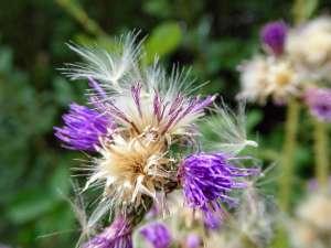 Het hoogveen verdroogt, maar gelukkig zijn er nog bloemen