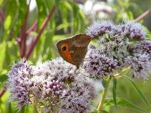 Prachtige vlinderkiekjes kunnen maken