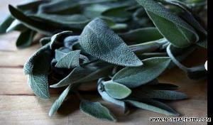 7 Common Health Benefits of Sage