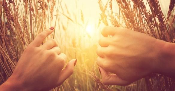 32738-wheatfield-sun-joy.1200w.tn