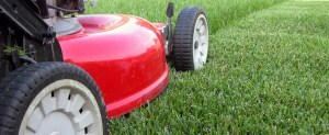 Grass-Cutting