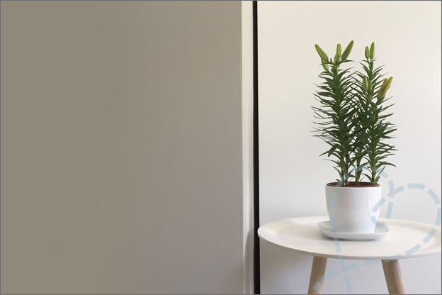 plant in huis