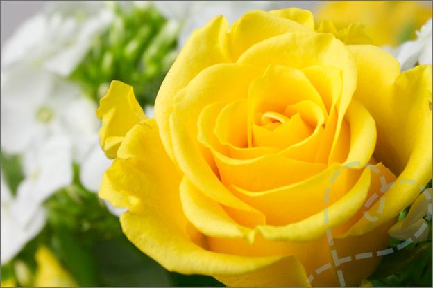 roos geel in vaas