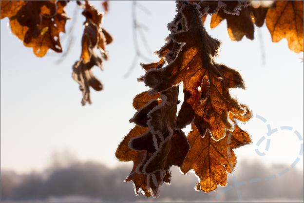foto_winter_5_bladeren