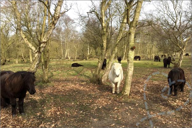 Natuurgebied Renesse Burg Haamstede paarden