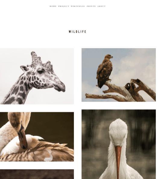 wildlife3