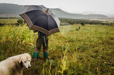 © Giuseppe Nucci. Lungo le autostrade dei pastori