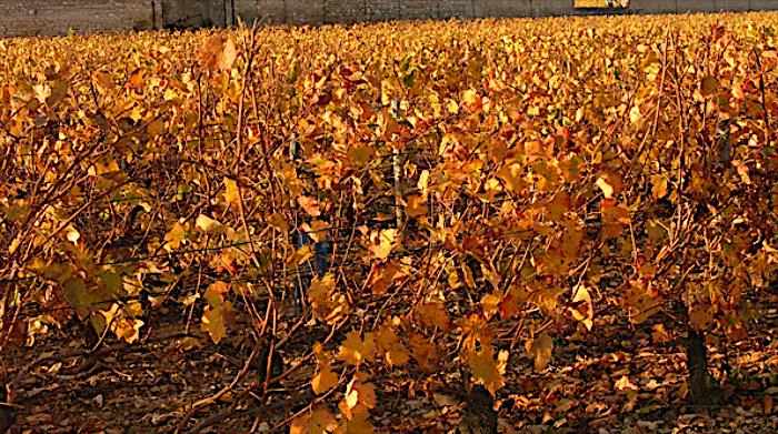 In Borgogna – Anche la cosa più semplice e più elementare può dar vita ad una immagine ok. Niente di sofisticato, infatti, in questo soggetto visto in un vigneto di Borgogna, famosa regione vinicola francese. L'illuminazione solare delicatamente dorata ha assegnato a questo insieme monocromatico una fattura di delicata oreficeria.