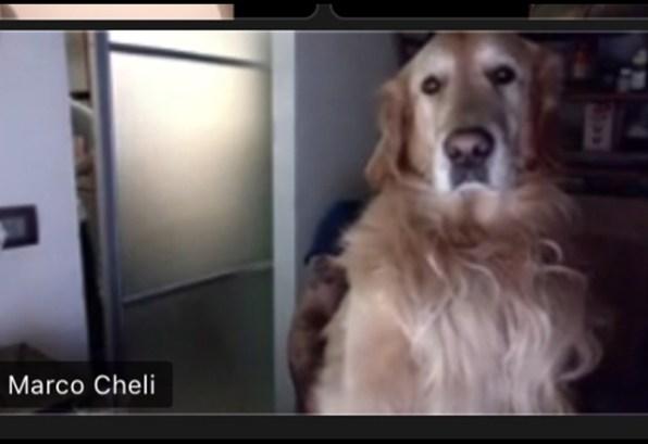 Cheli con cane