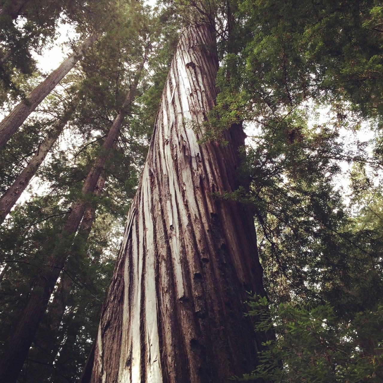 Twisted tree, still on Bull Creek Road