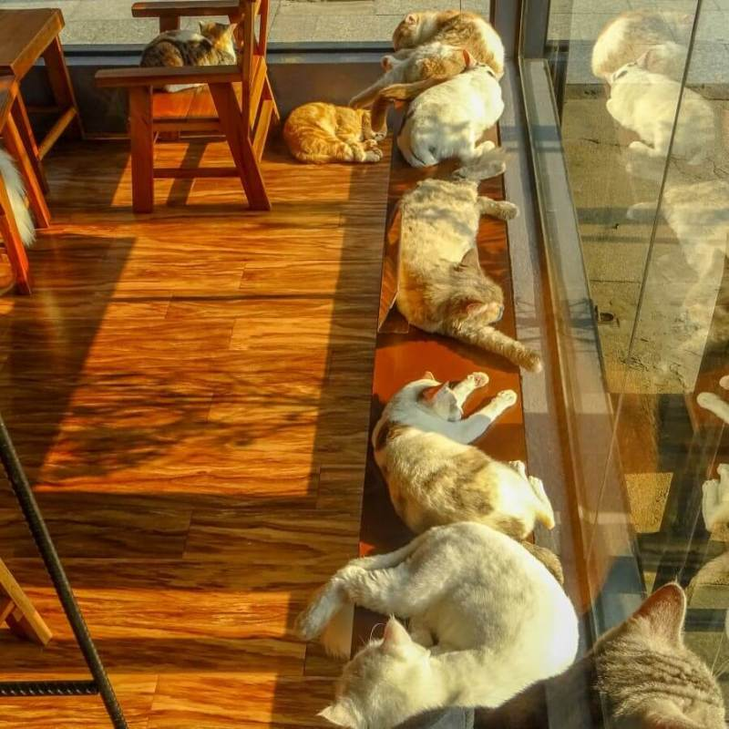Sunbathing at the Cat Cafe
