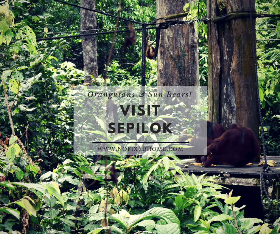 Visit Sepilok: A Day of Sun Bears and Orangutans