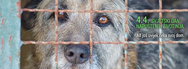 4.4. - Svjetski dan napuštenih životinja