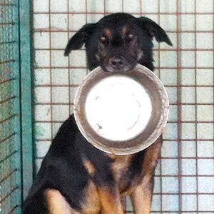 Donacije hrane za pse su više nego dobrodošle