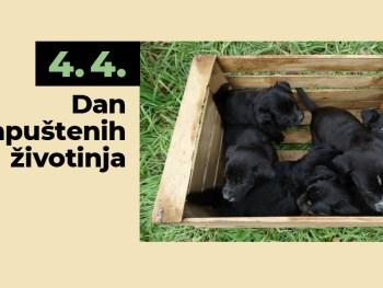 4. 4. - Međunarodni dan napuštenih životinja