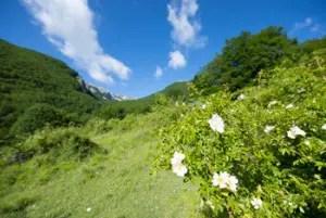 Un panorama del parco - foto Umberto Esposito, Wildilife Adventures