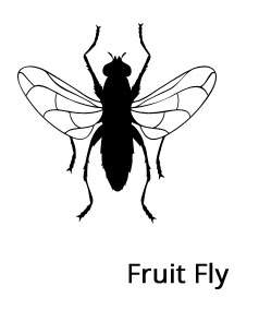 fruit-fly-prevention-no-insects-bug-eater
