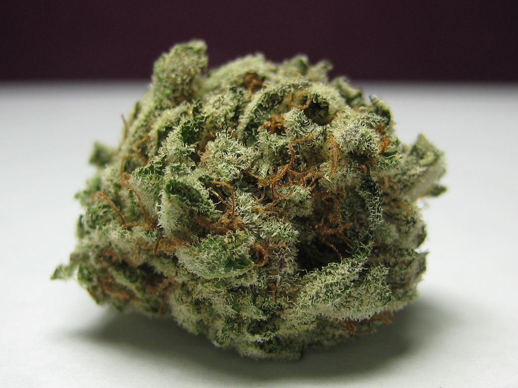 Weed porn blackberry kush