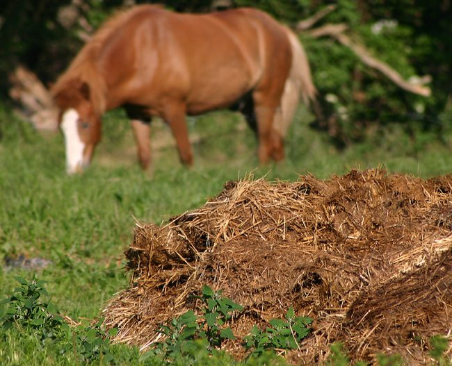 concimare con letame di cavallo