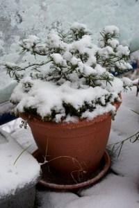 piante e gelo