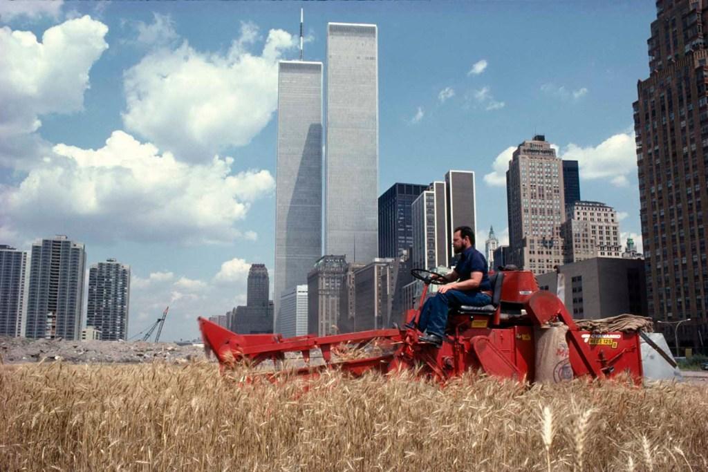wheatfield campo di grano agnes denes manhattan raccolto