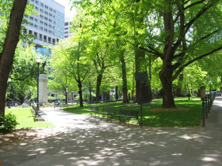 cambiamenti climatici gli alberi in città crescono più velocemente di quelli in campagna