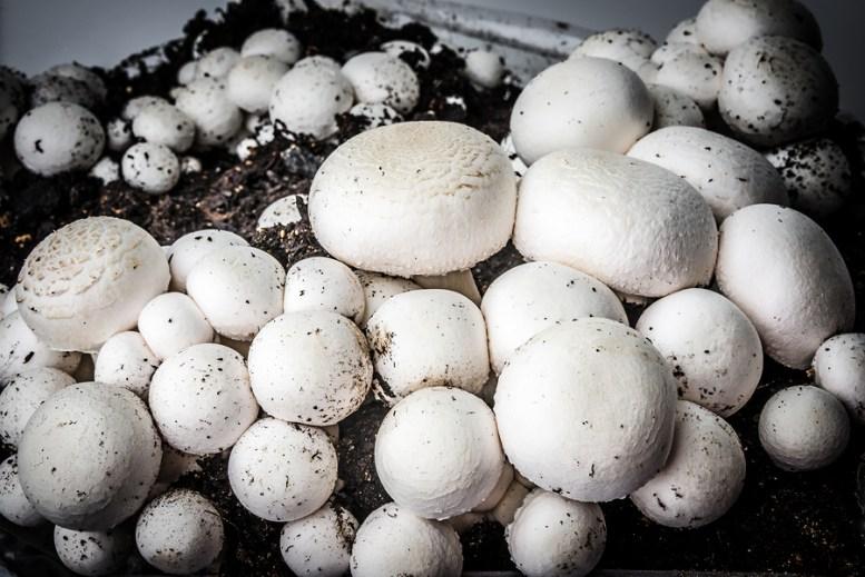 come coltivare funghi
