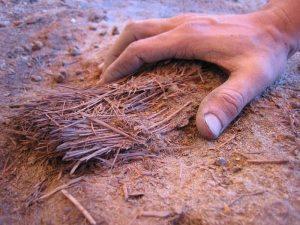 agricoltura-preistorica-nel-Sahara-10000-anni-fa-uomo-coltivava-cereali