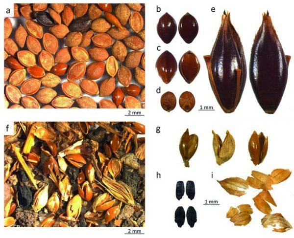 agricoltura-preistorica-semi-di-10000-anni-fa