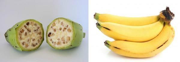 Frutta e verdura - banana selvatica e moderna a confronto