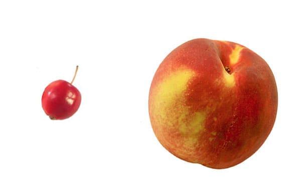 Frutta e verdura - pesca selvatica e moderna a confronto