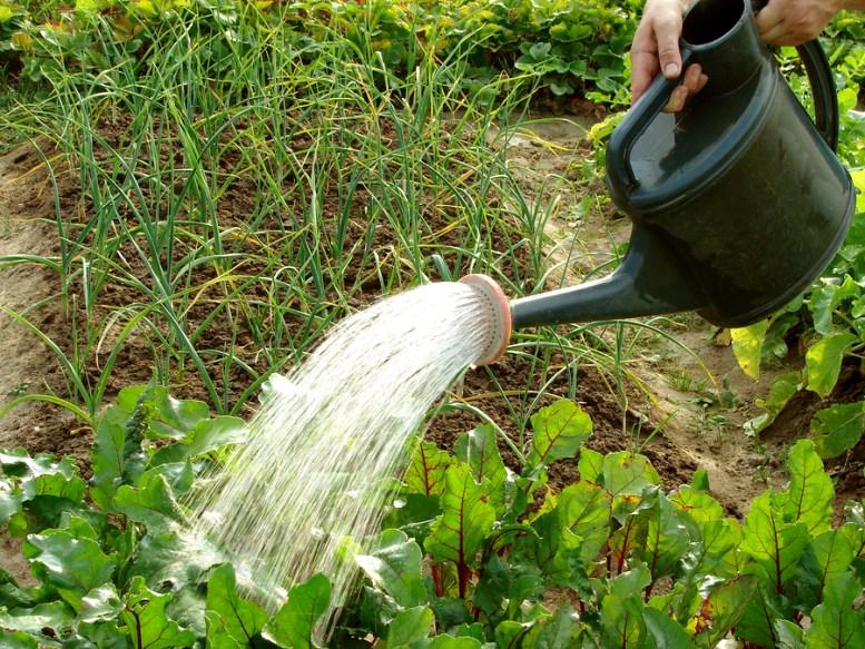 salvare una pianta annaffiata troppo