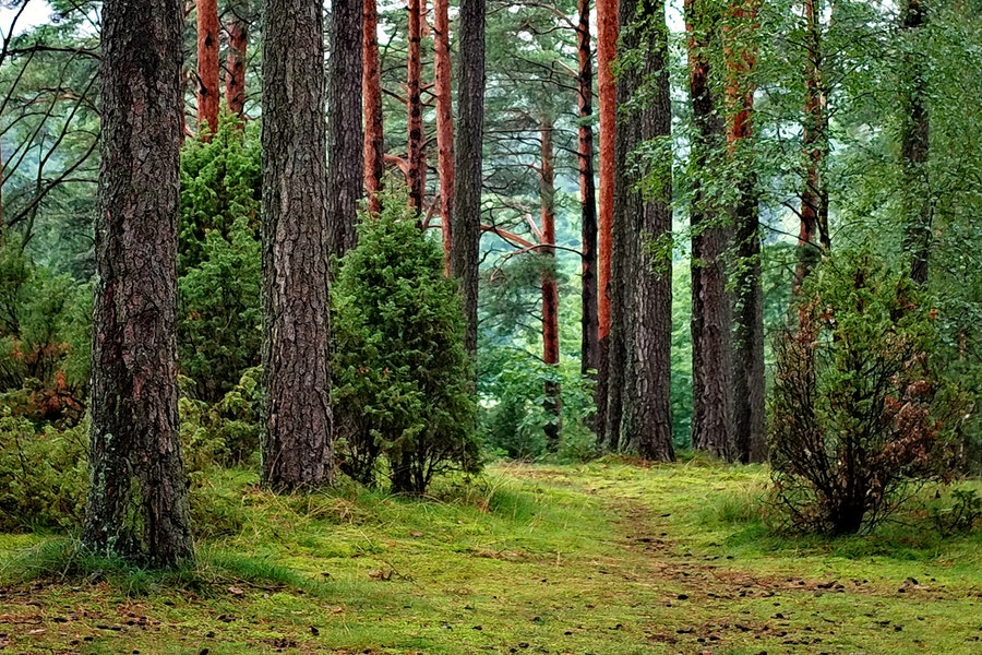 portare la natura in casa per sconfiggere lo stress