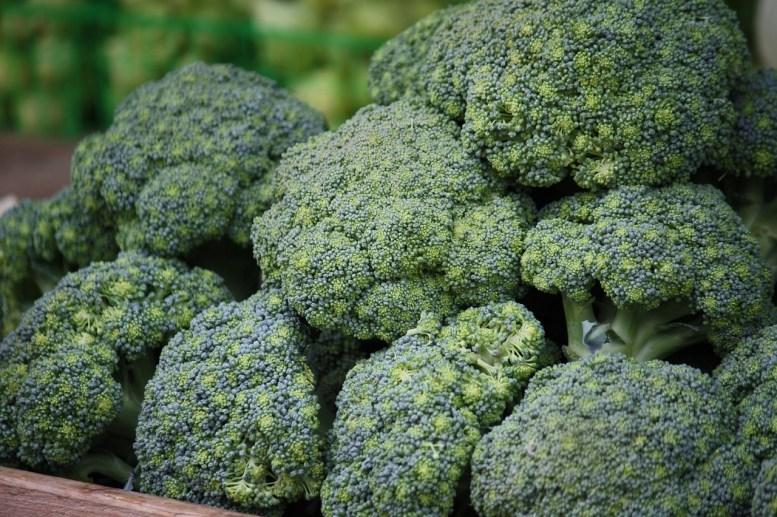 come coltivare i broccoli