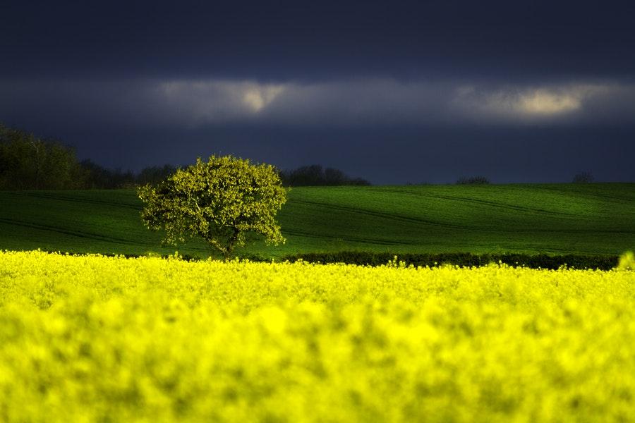 limitare l'uso di pesticidi