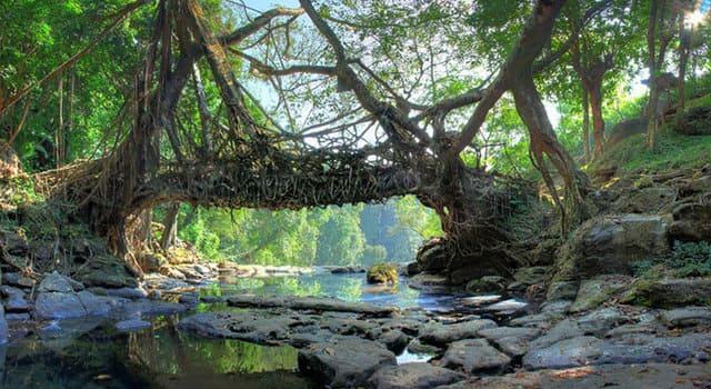 ponti-naturali-di-radici-di-Cherrapunjee