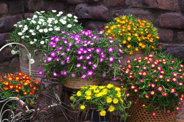 Piante Grasse Con Fiori Le Più Belle E Facili Da Coltivare