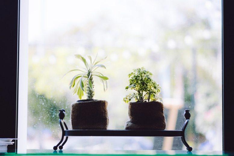 Come conservare le piante durante le ferie