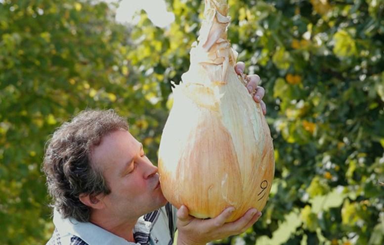 cipolla gigante