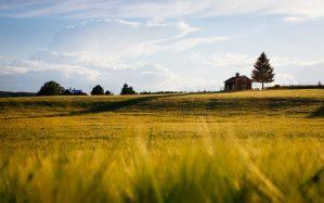 costruire su terreno agricolo