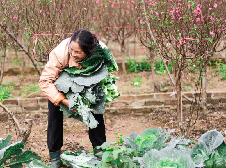 contratti agricoli