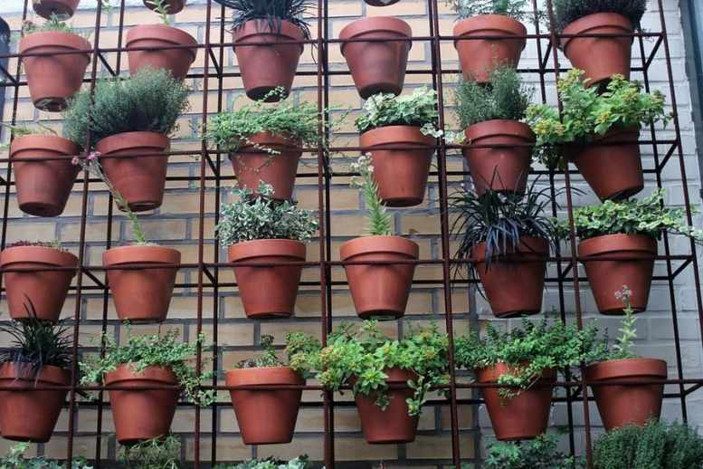 piante sul balcone