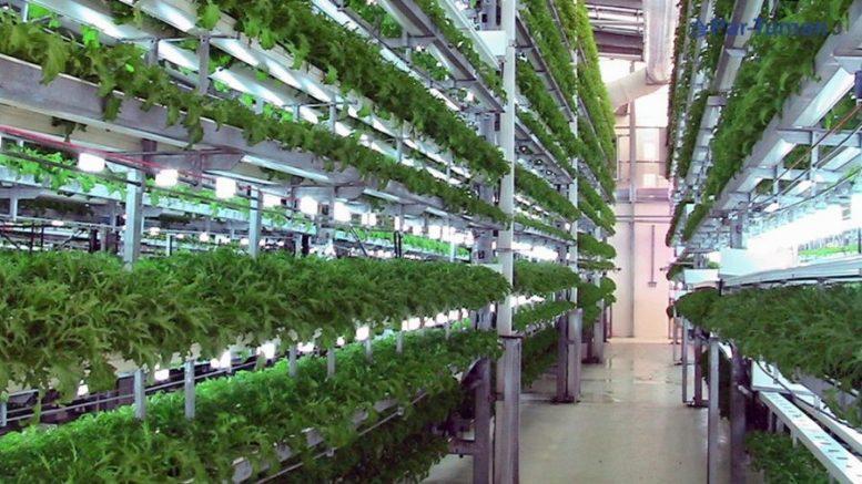 coltivare senza suolo
