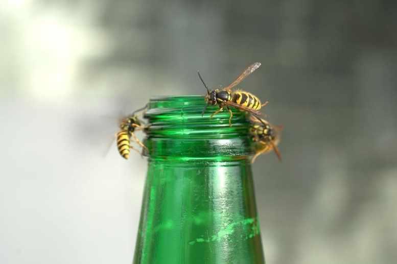 trappole vespe