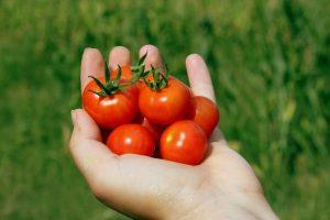 malattie piante estive