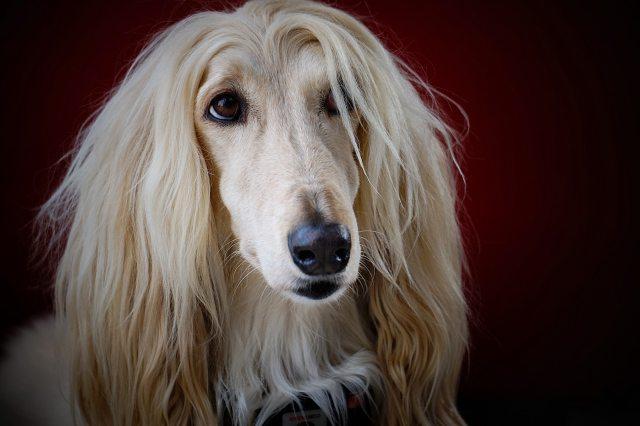 shampoo per cani a pelo lungo noi srls