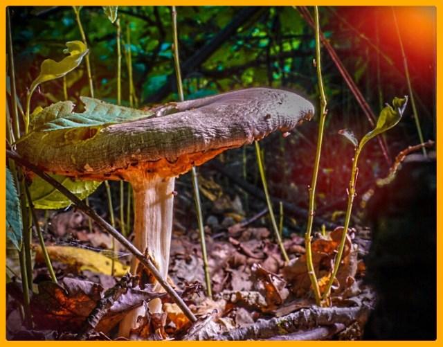 Ein Pilz im Wald