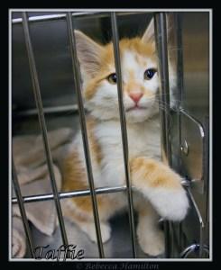 Pima Animal Shelter