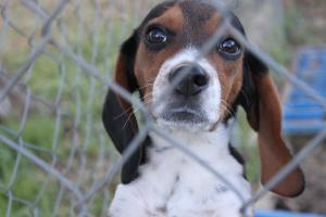 Saveable Pets in Pima County